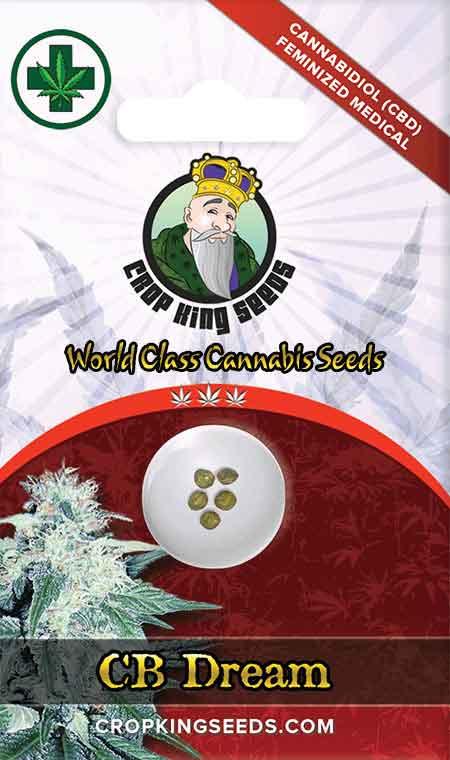 CB Dream CBD/Medical Seeds