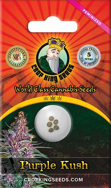 Purple Kush Feminized Marijuana Seeds