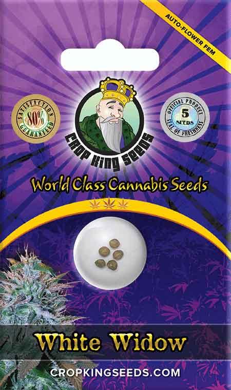 White Widow Autoflowering Marijuana Seeds