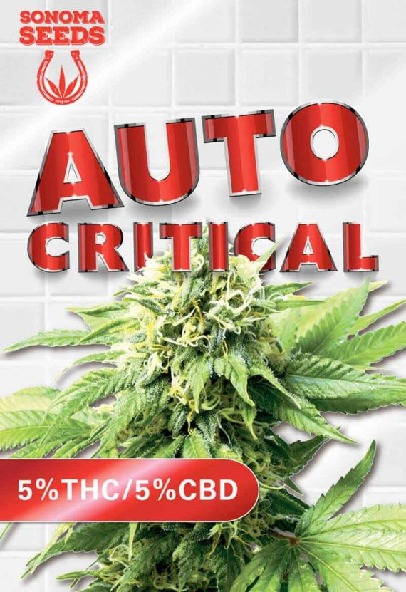 Auto Critical CBD Marijuana Seeds