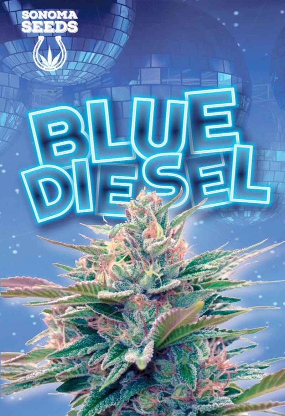 Blue Diesel Autoflowering Marijuana Seeds