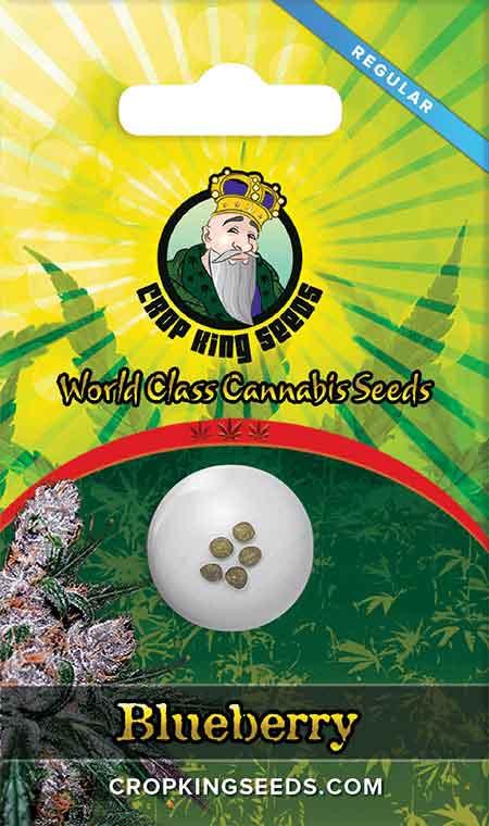 Blueberry Regular Marijuana Seeds