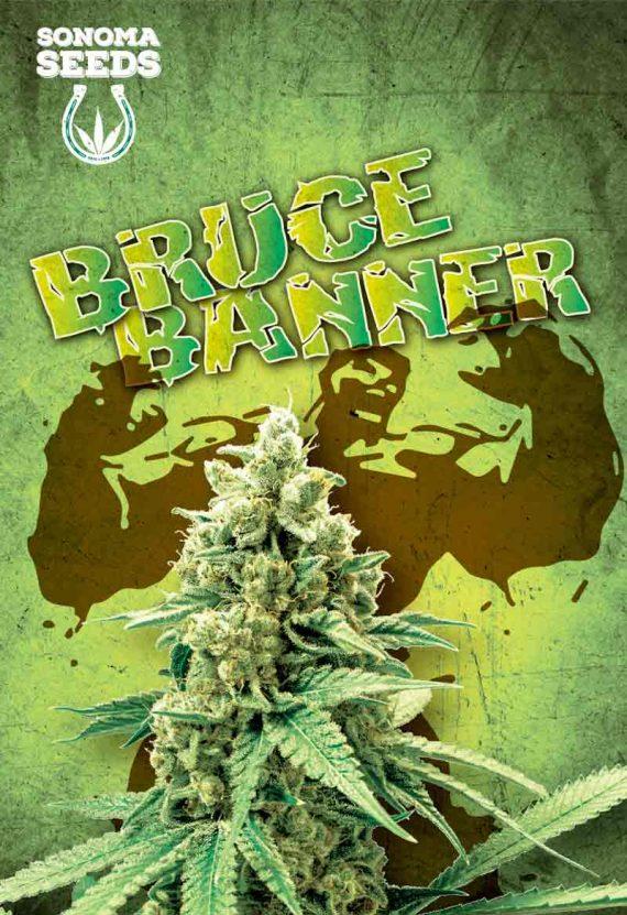 Bruce Banner Feminized Seeds