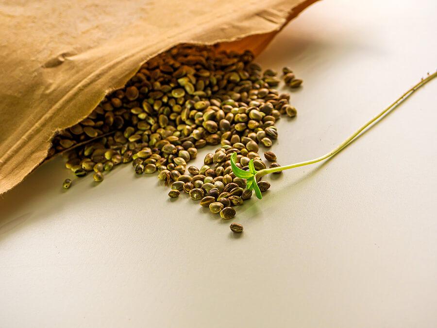 How to Store Marijuana Seeds Properly