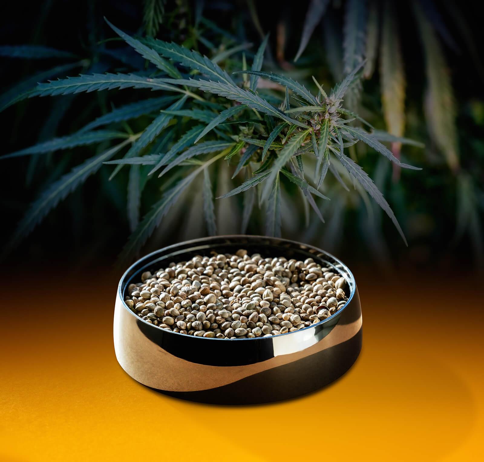 Social Media Marketing Tips for the Cannabis Seed Entrepreneurs