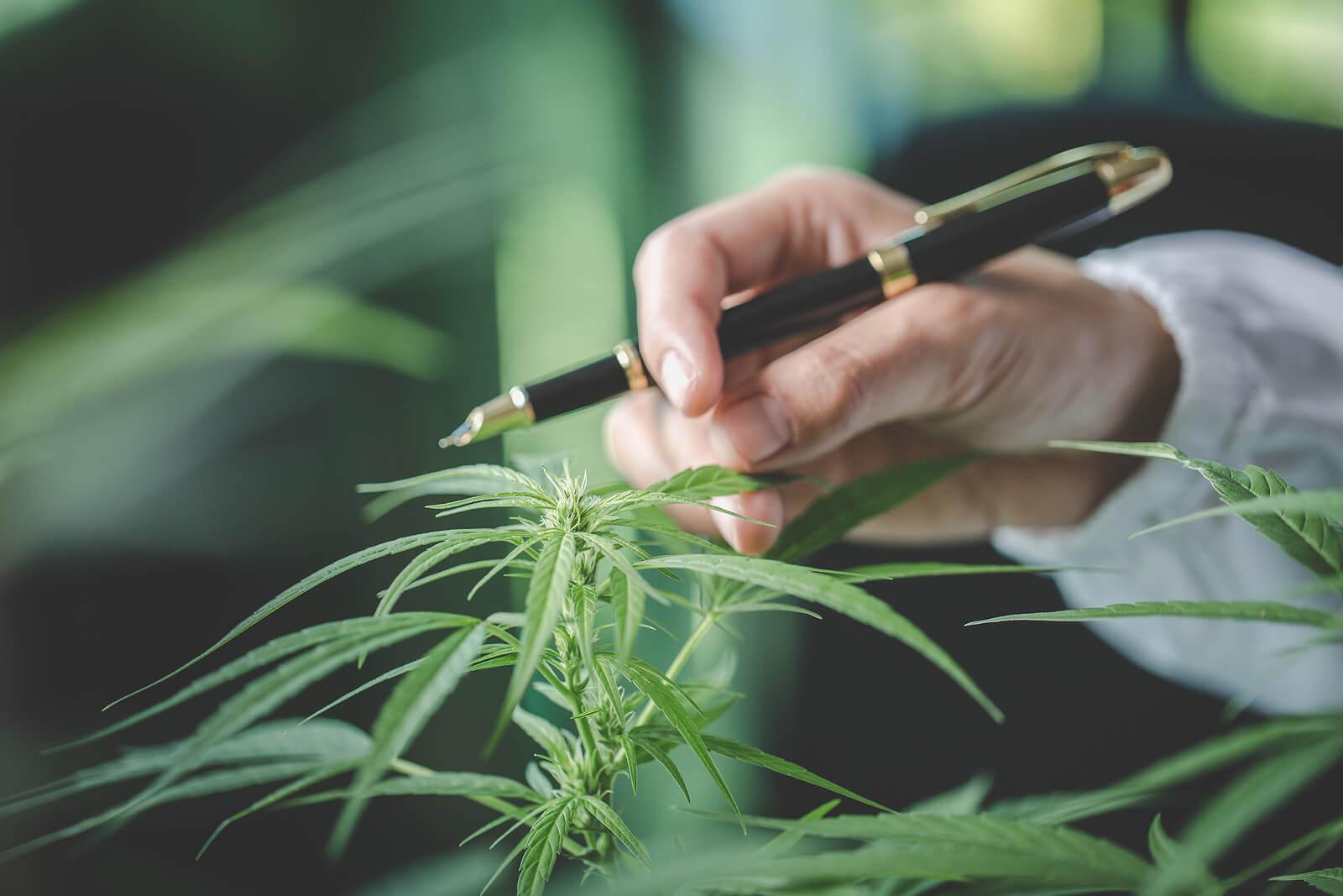 Top 10 Medical Marijuana Strains